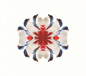 print_201510_alfredoRodriguez_tocororo_cover